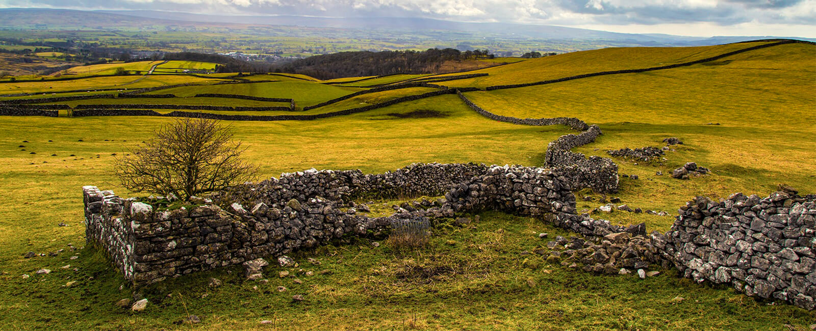Yorkshire Stone Wall